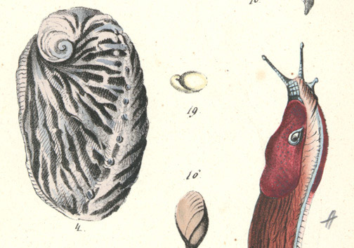 Sea Slugs by John William Hill(American Print)