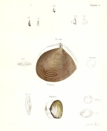 Sea Shells by John William Hill
