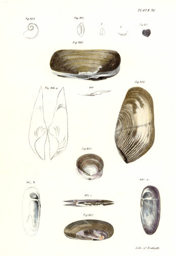 Sea Shells by John William Hill(American Print)