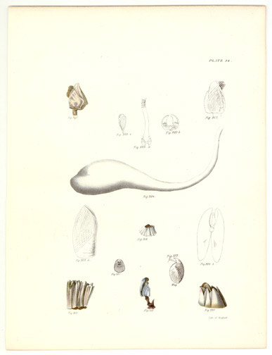 Sea Life by John William Hill(American Print)
