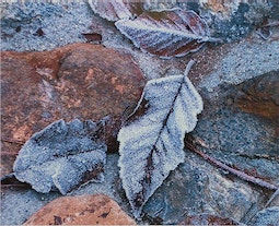 Frost on Leaves by Thomas S. Garcia