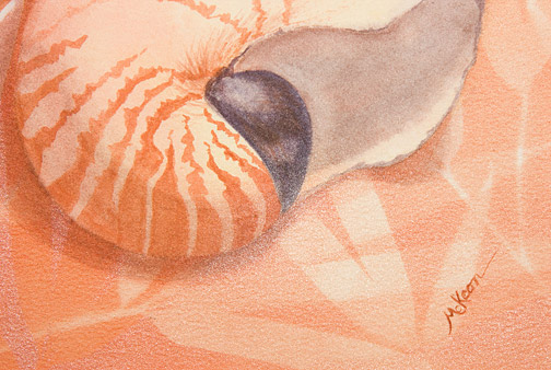 Sleeping Nautilus by Laurie McKeon(Hawaiian Painting/Drawing)