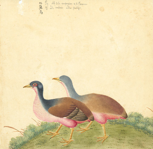 Chinese Bird Painting(Chinese Painting/Drawing)