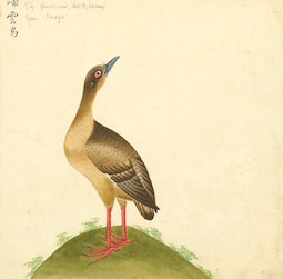 Southeast Asian Bird Painting