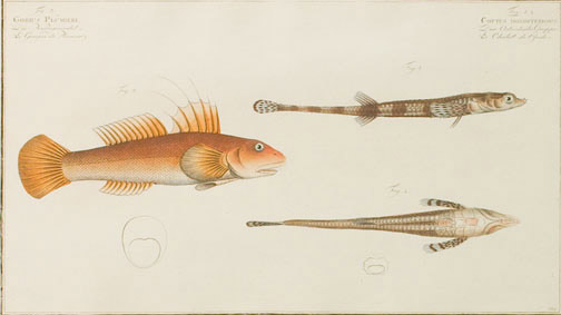 Fish by Kruger Junior(European Print)