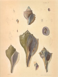 Shells by John William Hill